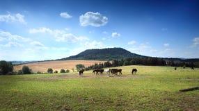 Partij paarden onder berg royalty-vrije stock afbeelding