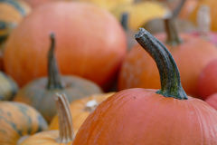 Partij van aardige kleurrijke Halloween-pompoenen Stock Foto