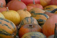 Partij van aardige kleurrijke Halloween-pompoenen Stock Afbeelding