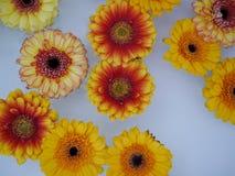 Partij van bloemen die op water zwemmen Stock Afbeeldingen