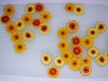 Partij van bloemen die op water zwemmen Royalty-vrije Stock Foto
