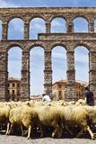 Partij van de nauwe vallei in Segovia, passage van schapen door het aquaduct van Segovia in Spanje Tradities en douane stock afbeelding