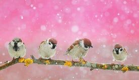 partij van grappige kleine vogels die in een mooi Kerstmispari zitten stock afbeeldingen