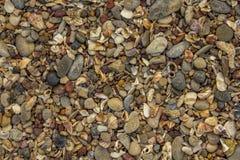 partij van kleine zeeschelpen en stenen van verschillende vormen, kleuren en grootte, hoogste mening natuurlijke textuurtextuur stock afbeeldingen