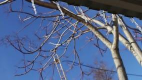 Partij van Smeltende ijskegels op een dak stock videobeelden