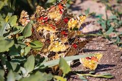 Partij van vlinders rond het nest in de zomer stock afbeelding