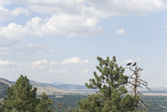Partilha continental Boulder, Colorado EUA imagens de stock royalty free
