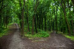 Parting of the ways in a green summer forest Royalty Free Stock Photo