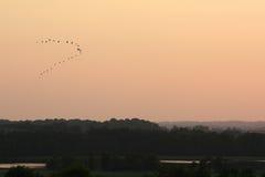Partir d'oiseaux Photo libre de droits