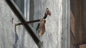 A partir de la vida de pájaros