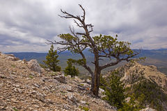 À partir du dessus de la montagne de coeur Photographie stock libre de droits