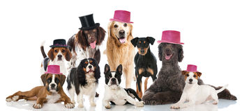 Partito del cane Fotografia Stock Libera da Diritti