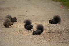 Partito della prima colazione degli scoiattoli fotografie stock