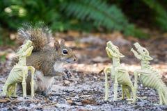 Partito divertente di Halloween dello scoiattolo immagini stock