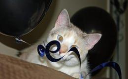 Partito Kitty Fotografia Stock Libera da Diritti