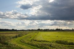Partly abandoned meadows. Partly abandoned wet natural meadows under summertime cloudy sky Stock Photos