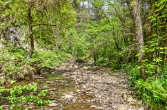 Partly dry riverbed. Of a little brook in the forest near Malmedy in the Belgian ardennes Stock Image