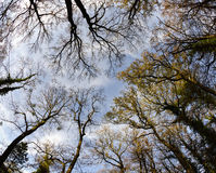 Partly leafless treetops against the blue sky. View through partly leafless treetops against the blue sky in autumn stock image
