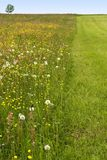 Partly mowed flowering meadow Stock Images
