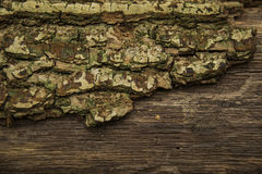 Partly tree with bark texture Stock Photography