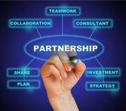 partnerstwo Zdjęcia Stock