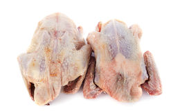 Partridge meat stock photo