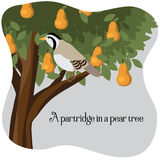 A partridge in a pear tree Stock Photo