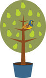 Partridge in a Pear Tree Royalty Free Stock Photos