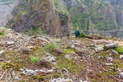 Partridges in the mountains of Madeira royalty free stock photos