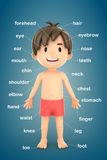 Parts of the body. 3d render of a boy showing parts of the body Royalty Free Stock Photography