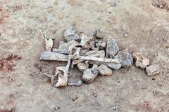 The parts of bones on the ground. Archaeological excavations.  Close up human remains. Outdoors, copy space stock photos