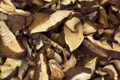 Parts déshydratées des champignons de couche Photographie stock libre de droits
