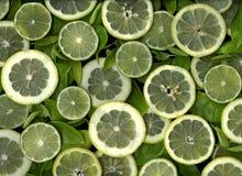 Parts de citron et de limette Images libres de droits