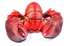 Parts of lobster isolated Royalty Free Stock Photo