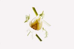 Parts of a raw fennel thinly cut open. Stock Photo