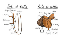 Parts of a saddle and bridle, . Stock Photo