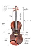 Parts of a violin Stock Photo