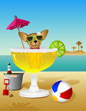 Party Animal Royalty Free Stock Images