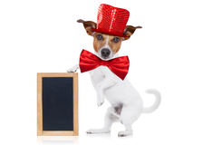 Party animal dog stock images