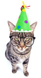 Party cat. A funny cat wearing a tall hat and glasses on white Stock Image