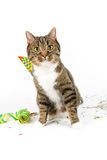 Party cat Royalty Free Stock Photography