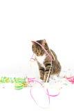 Party cat Stock Photo