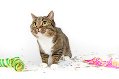 Party cat Royalty Free Stock Photo
