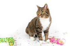 Party cat Stock Photos