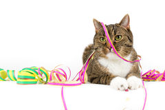 Party cat Stock Image