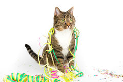 Party cat Royalty Free Stock Image