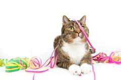 Party cat Royalty Free Stock Photos
