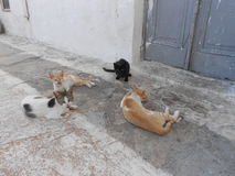 Party of the cats, all are either. If they do their morning chat Stock Images