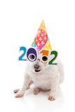 Party Celebrate New Year 2012. A funny white dog with comical 2012 glasses and wearing a colourful party hat to celebrate New Year 2012. White background Stock Photo