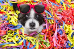 Party celebration dog Stock Photo